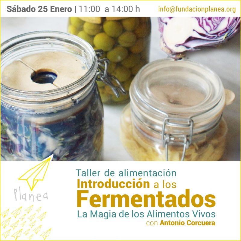 Taller Introducción a los fermentados